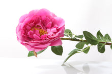 Load image into Gallery viewer, Stunning faux bright pink Old English rose bud