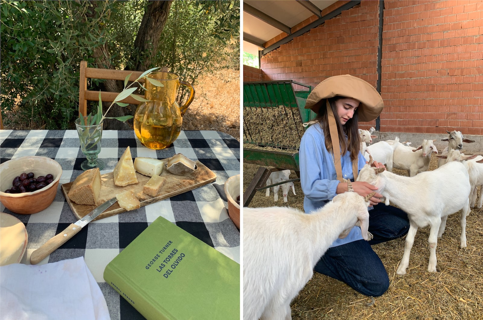 books and goats