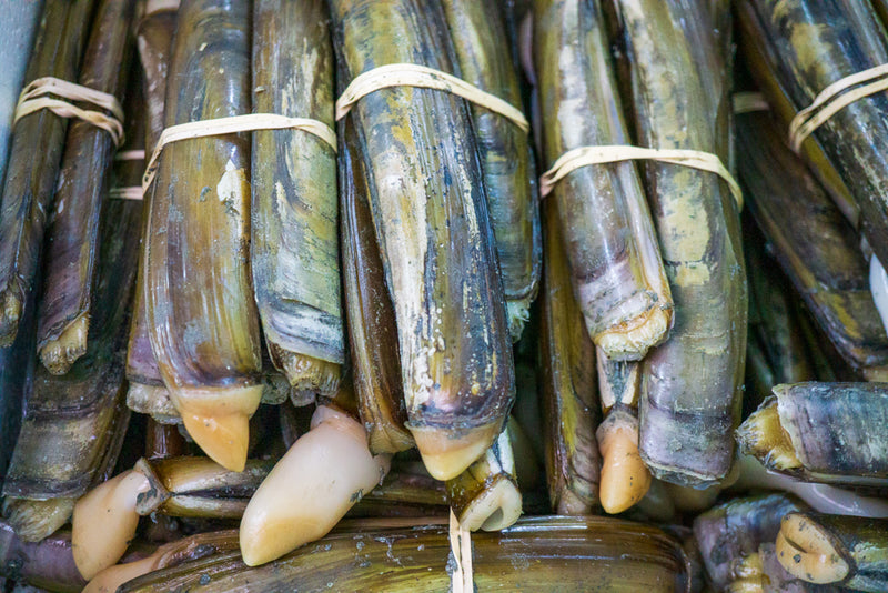 Razor Clams - Massachusetts
