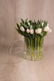 CRYSTAL BOX 25 TULIPANES  blancos