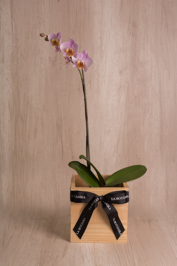 Wood Box con Orquídea