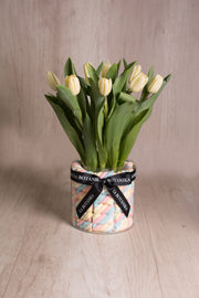 Marshmallows Tricolor con Tulipanes - sameday