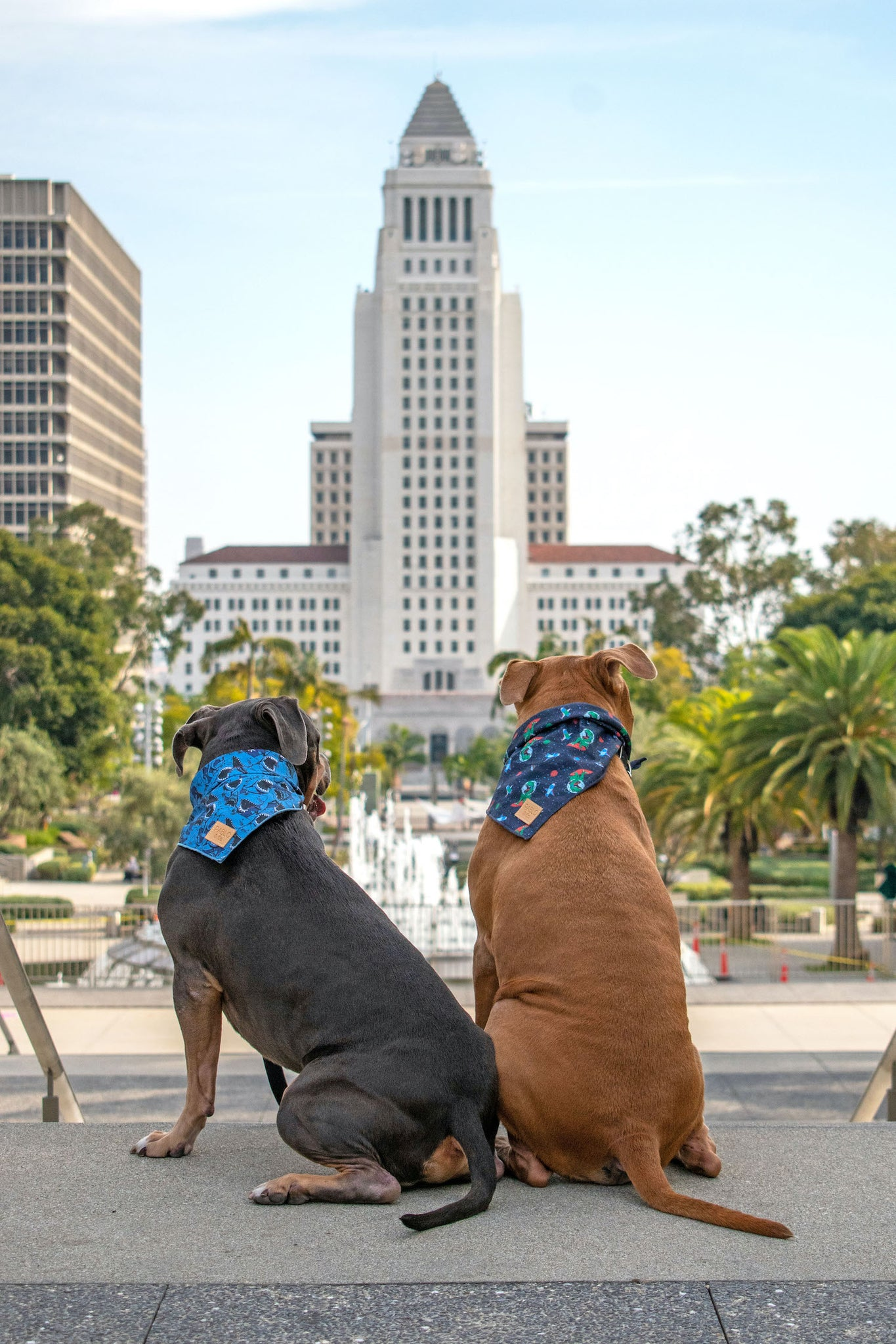 Cute dogs in Pablo & Co. bandanas at Grand Park looking over City Hall.