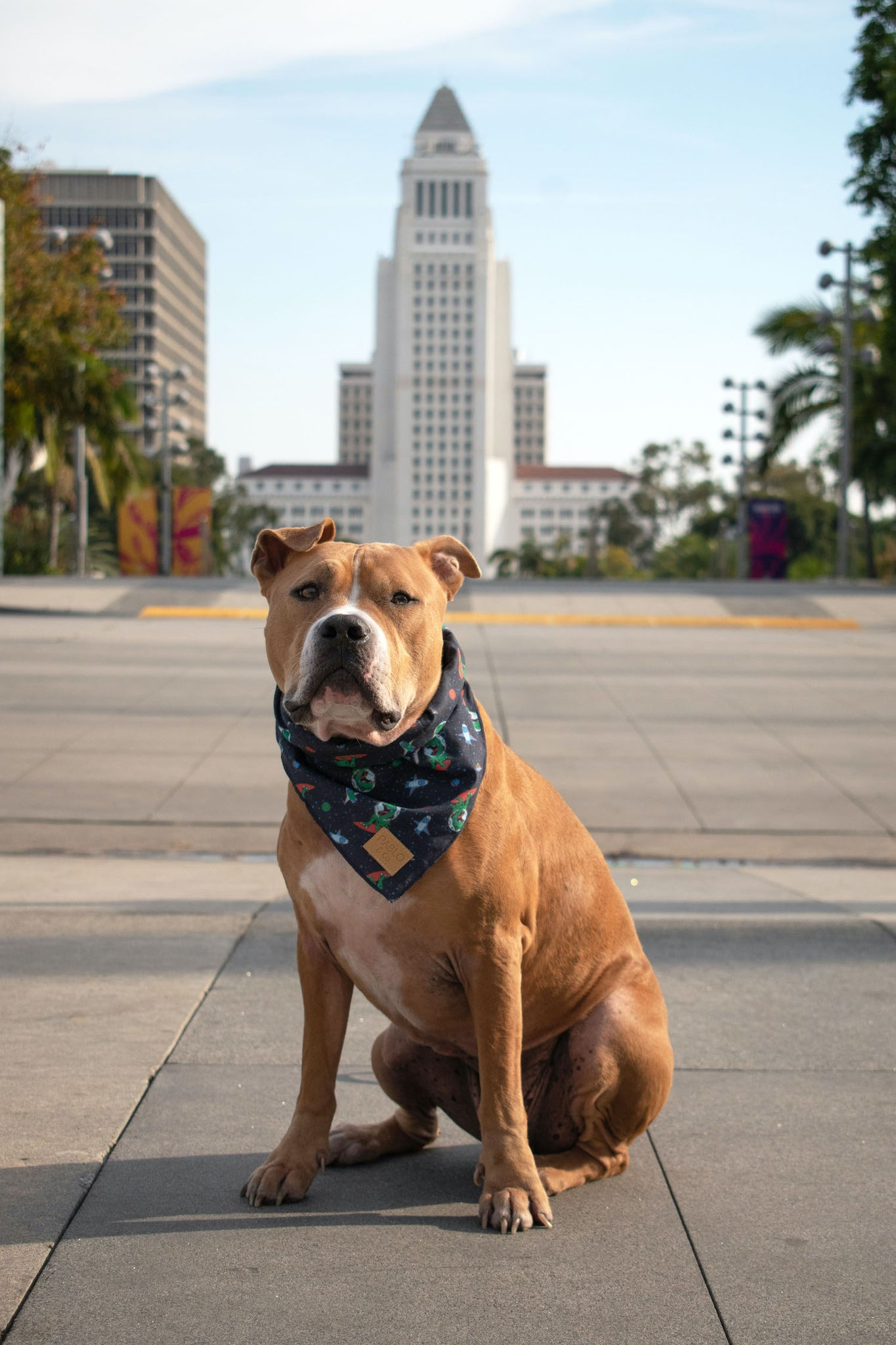 Cute dog in Pablo & Co. Space Dinos bandana at Grand Park.