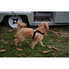 Load image into Gallery viewer, Charlie's Backyard Easy Harness-Black
