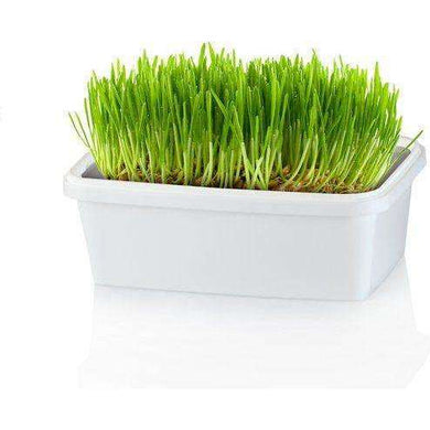 Pet Greens Meadow Self-Grow Tub 5 oz.