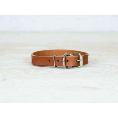 ROMAN Dog Tan Collar