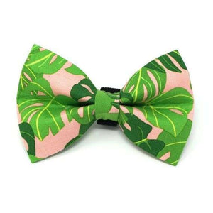 Winthrop Clothing Co. Monstera Bowtie