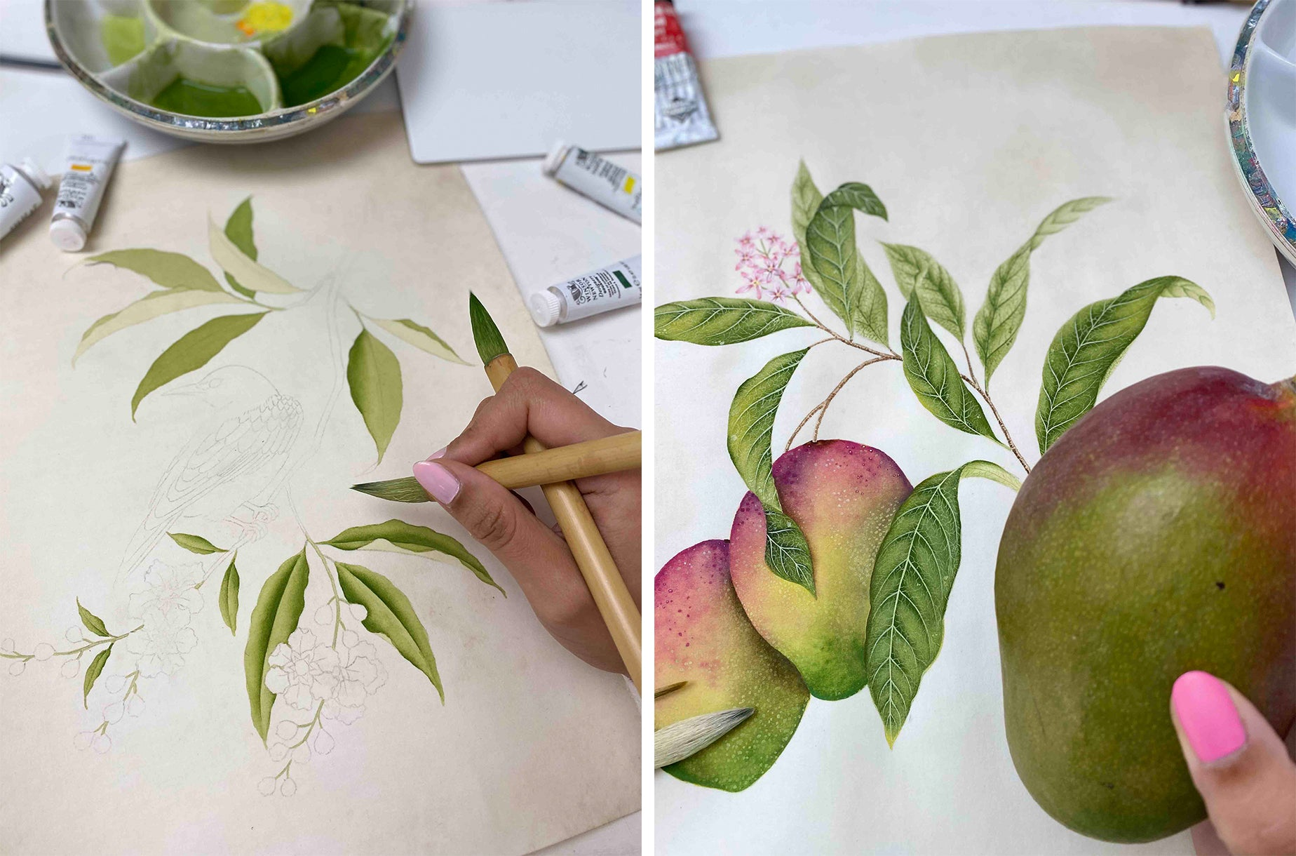 Diane Hill painting the botanical collection work in progress mangos