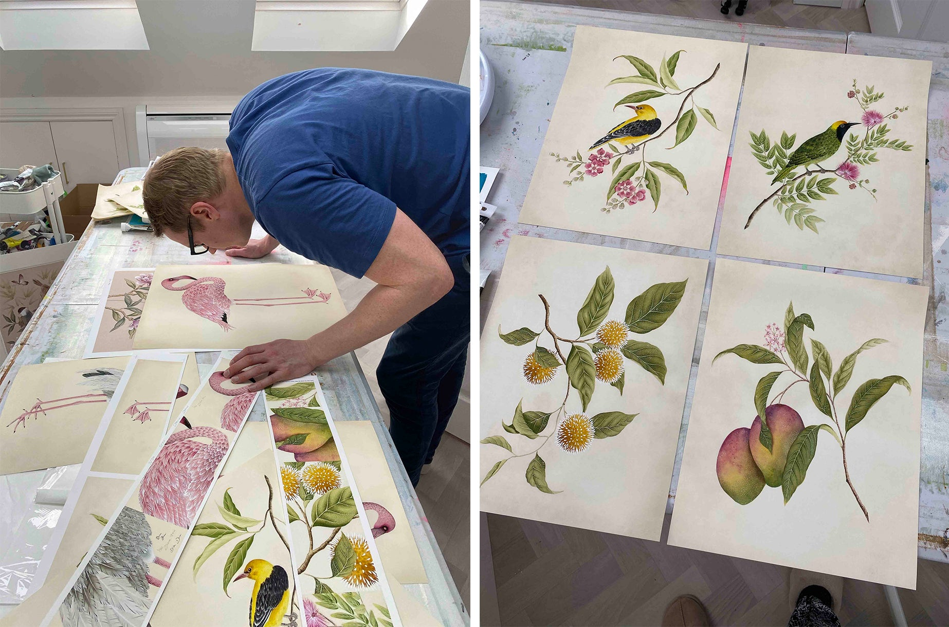 Diane Hill botanical collection reviewing images