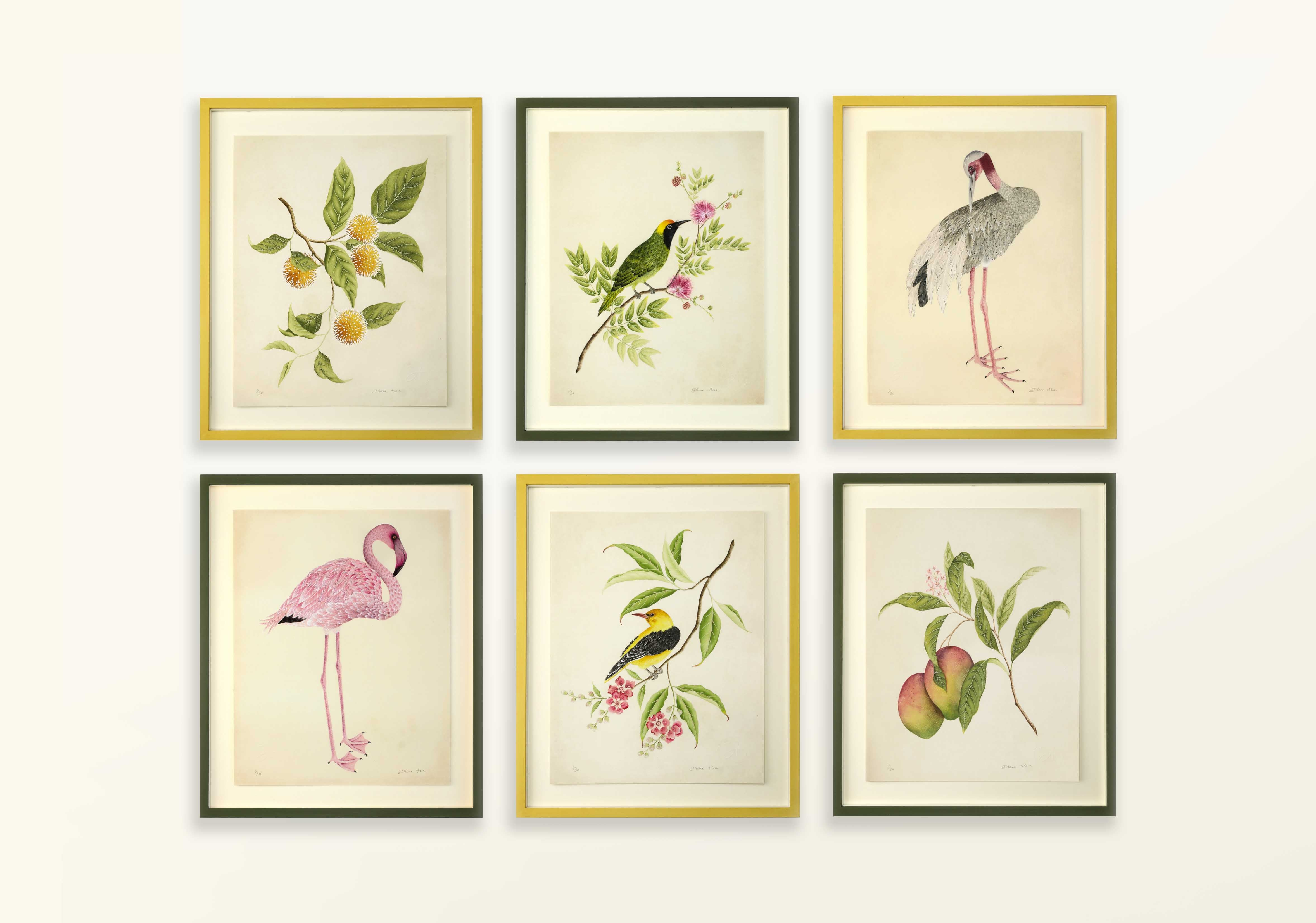 Botanical collection by Diane Hill - collection of 6 prints side by side