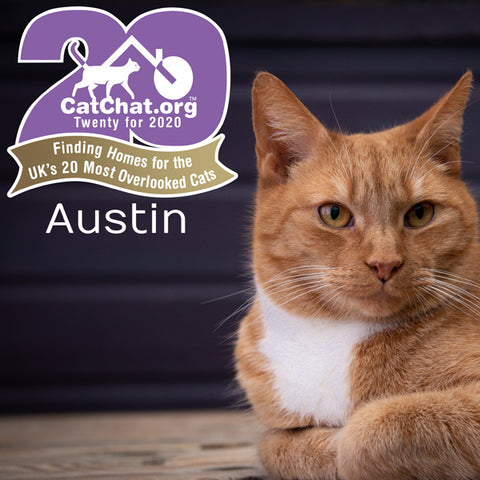 Austin has just been rehomed through Cat Chat after 2 years of waiting