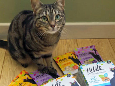 Beautiful tabby cat Heidi is waiting for her HiLife it's only natural cat food in sauce