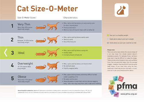 Download PFMA Cat Size-O-Meter to help maintain your cat's healthy weight