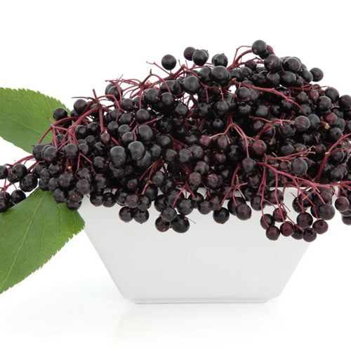 TFA Elderberry
