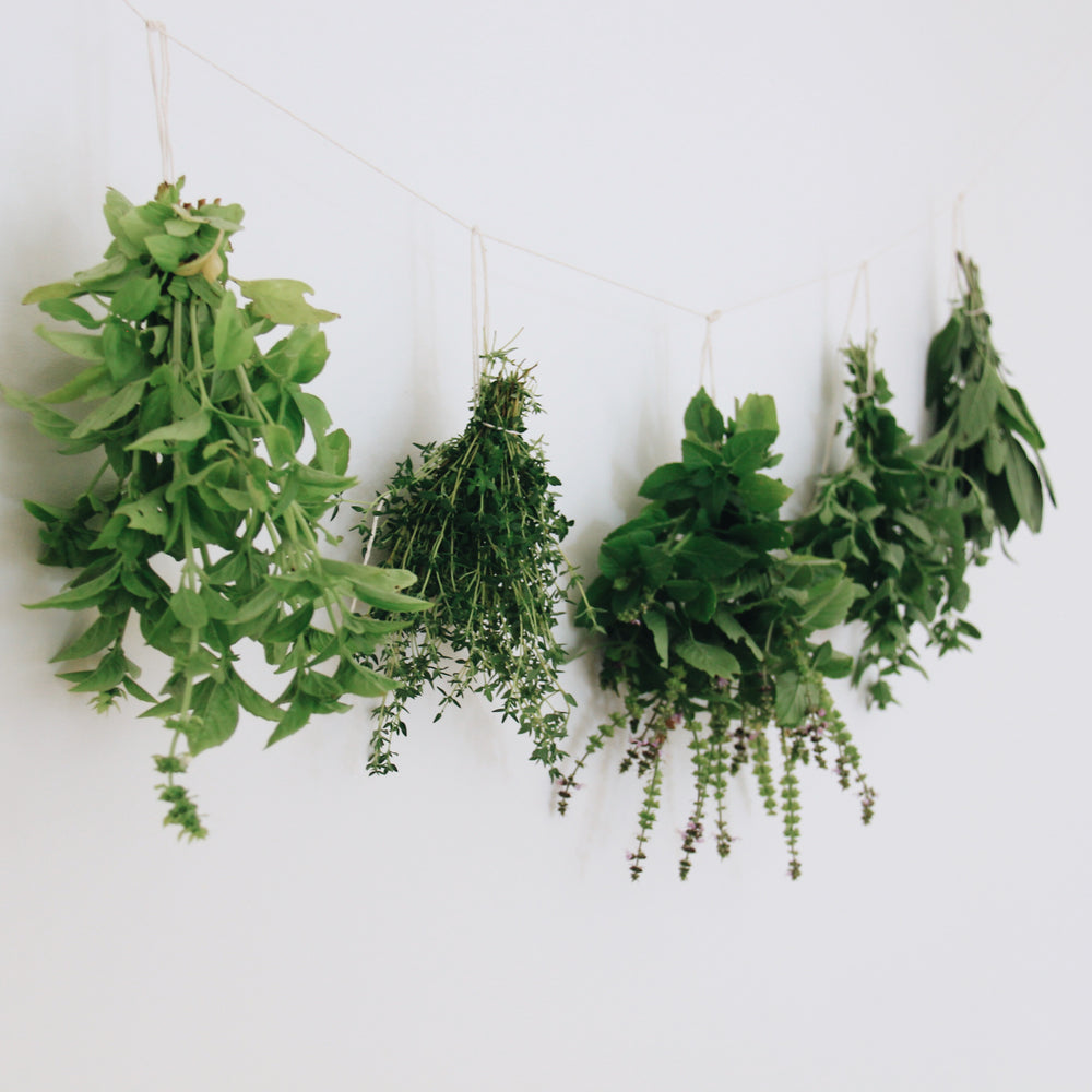 How to start a herb garden at home