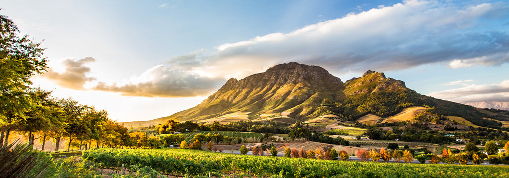 South African vineyard | South African wines online in Hong Kong | Free Wine delivery Hong Kong