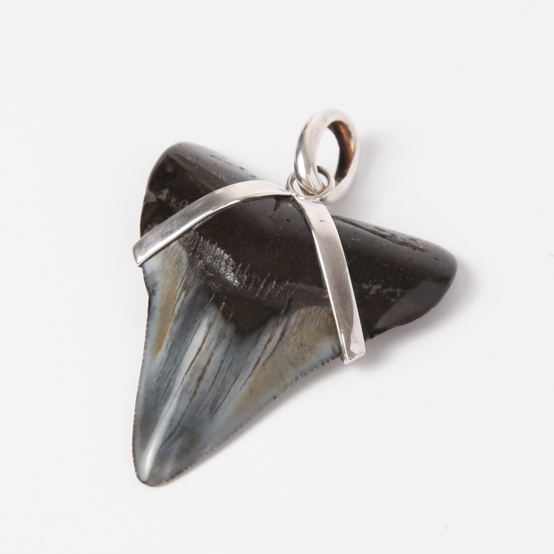 Fossil Shark Tooth Pendant with Sterling Silver
