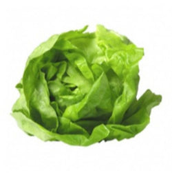 Lettuce Round Loose