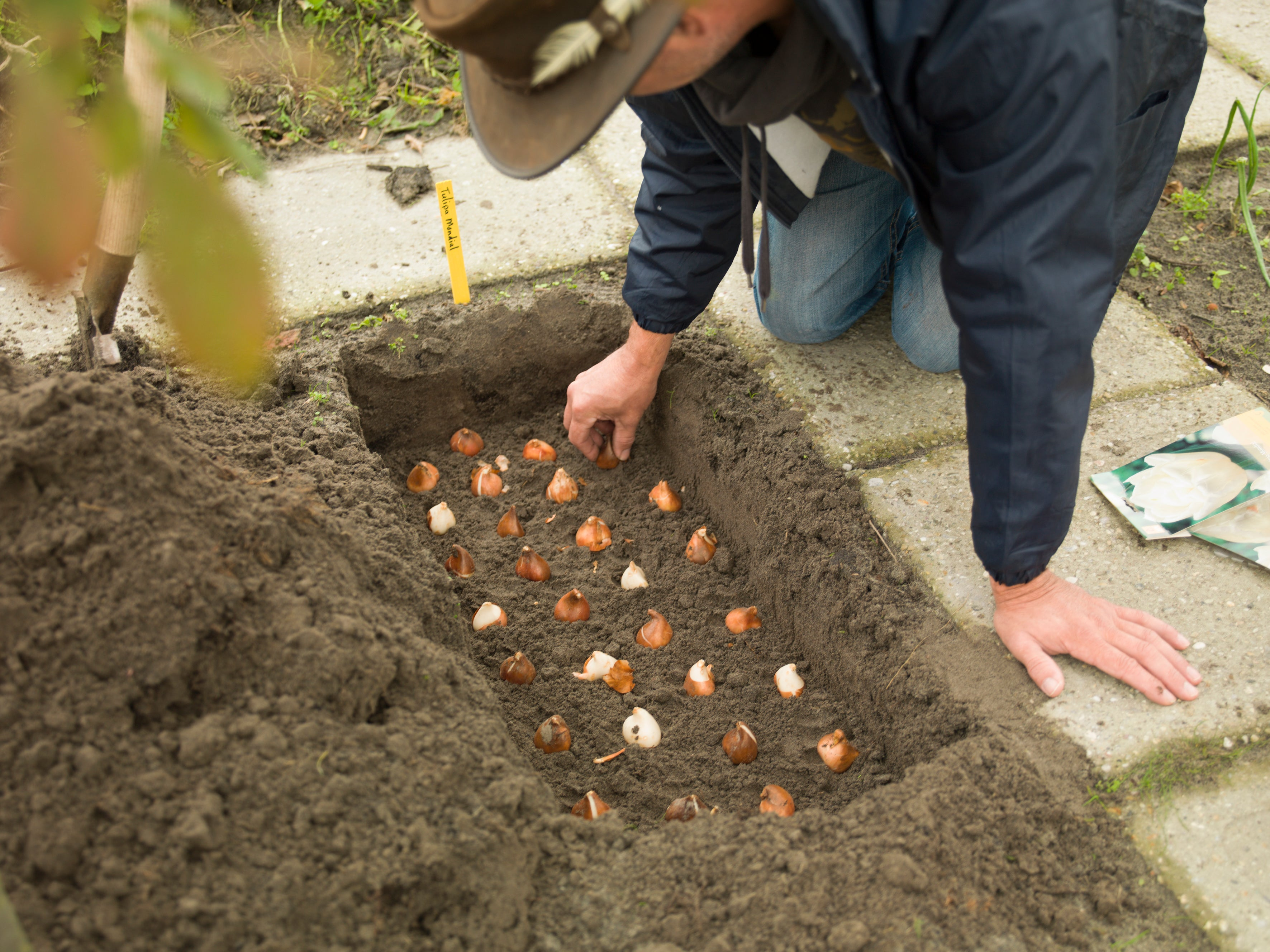 Can You Plant Bulbs In The Winter?