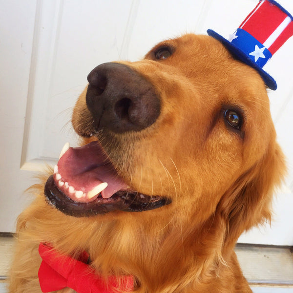 July 4th Dog Safety