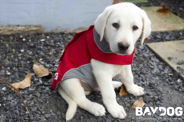 BAYDOG Hires Two Top Dogs