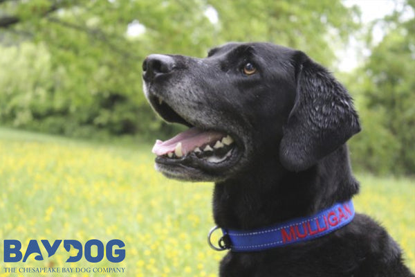 Why You Should Use an Embroidered Dog Collar