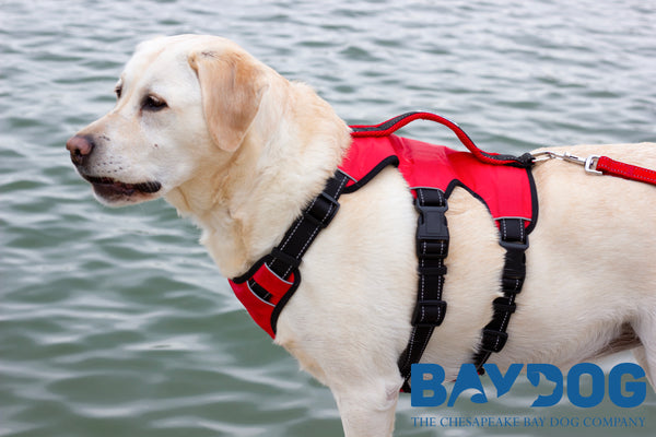 The Best Dog Harness for Hiking and Adventures