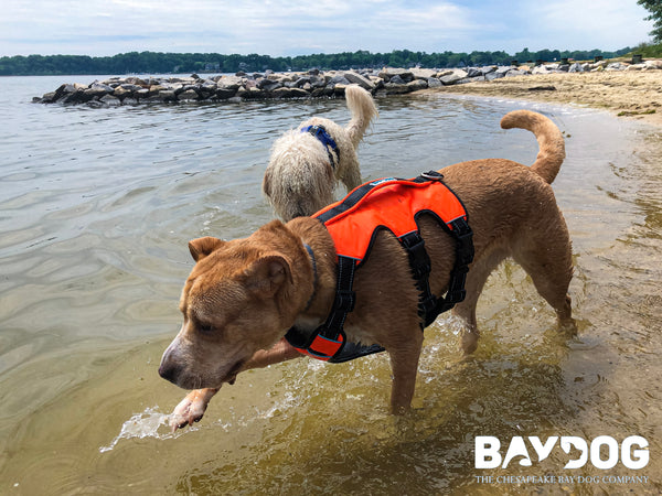 Adventure Tested: The Galveston Bay Harness