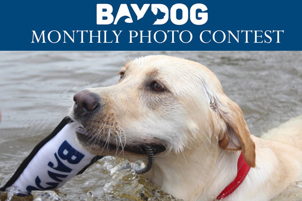 Introducing BAYDOG's Monthly Photo Contest