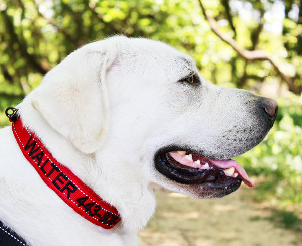 Personalized Dog Collars - Are They Worth the Money?