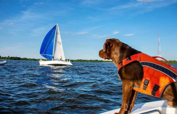 Beat the Heat this Summer with your Canine Companion