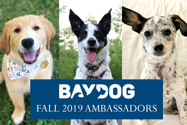 Announcing our BAYDOG Ambassadors!
