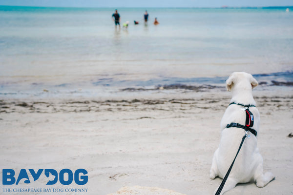 7 Items Your Dog Needs at the Beach