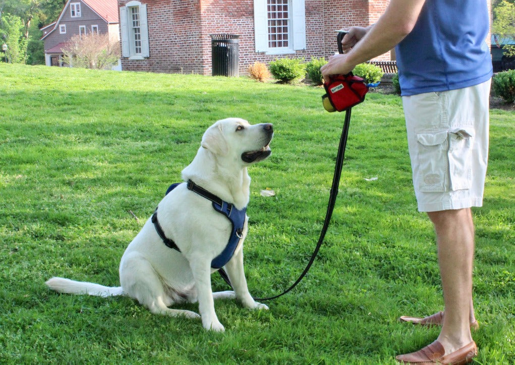 How to Introduce Your Dog to New Neighbors