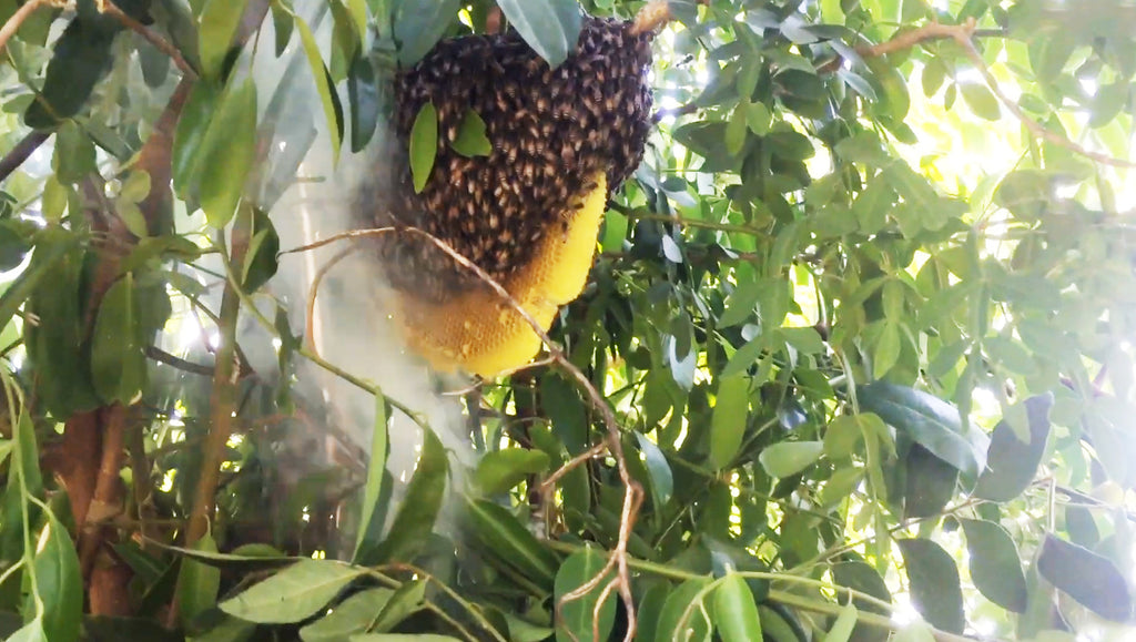 Forest Honey Hunters Blog Royal Bee Brothers