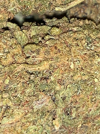 Green Crack Hemp Flower 23% CBD