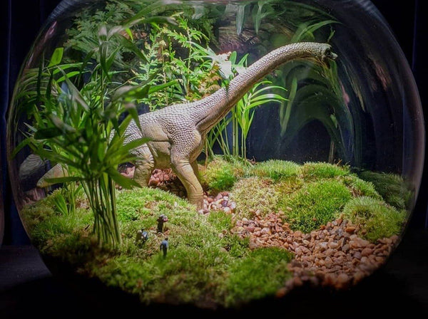 Create a Miniature Terrarium with Ben Newell from Worcester Terrariums Life Style Worcester Terrariums
