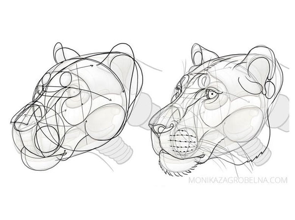 Learn Animal Anatomy To Draw Realistic Animals From Imagination Class101