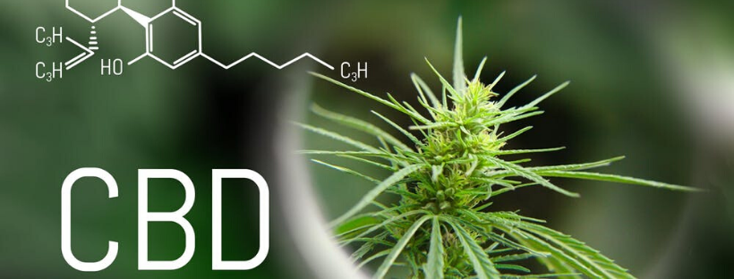 What is CBD and how does it relate to THC?