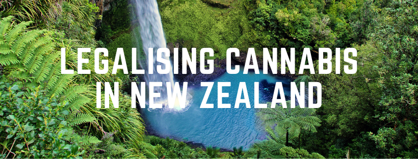 The Latest on Legalising Cannabis in New Zealand