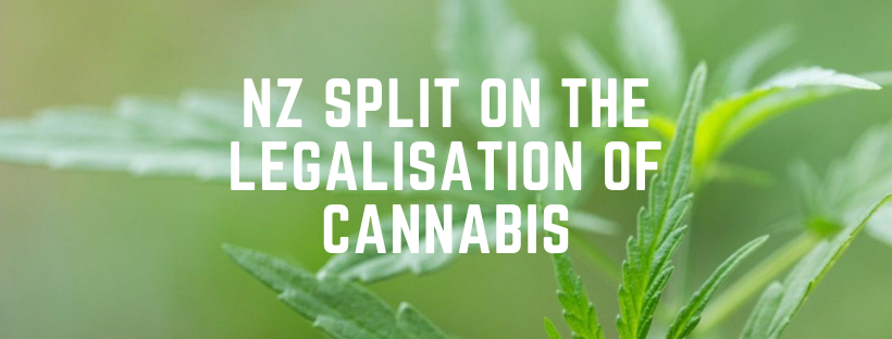 NZ Split on the Legalisation of Cannabis