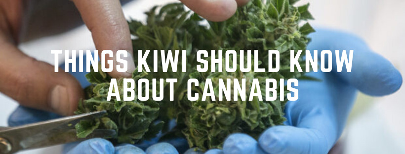 things every kiwi should know about cannabis