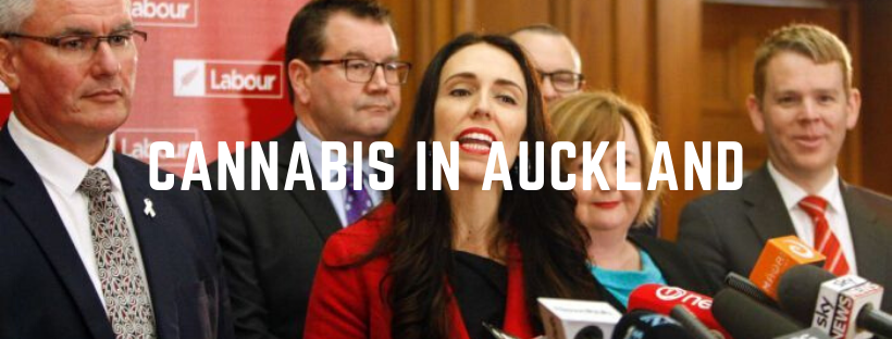 is cannabis legal in auckland?