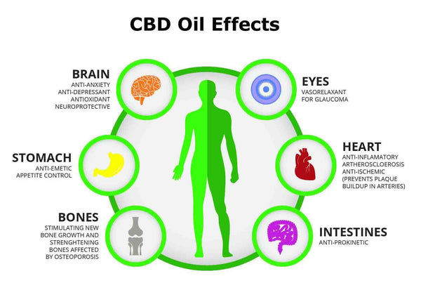 The potential benefits of CBD oil.