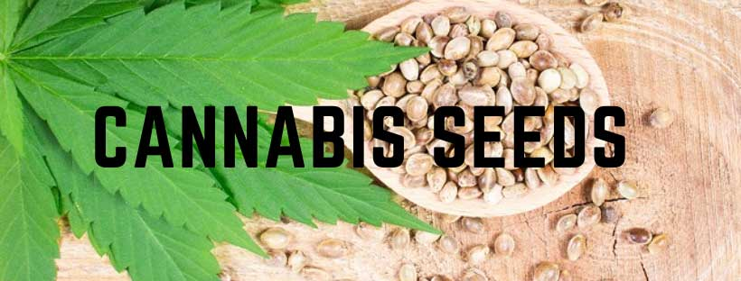 Cannabis Seeds New Zealand