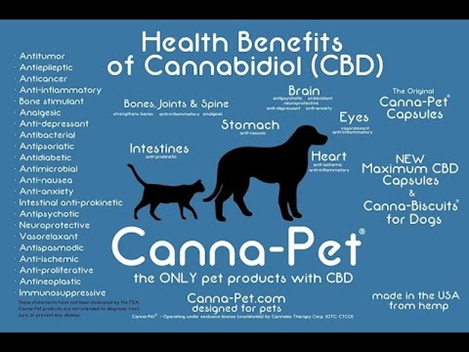 The health benefits of CBD to pets