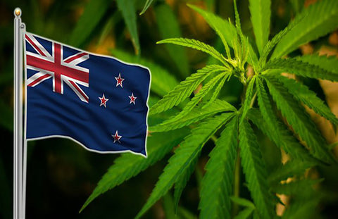 New Zealand legalised cannabis for medical use nationwide