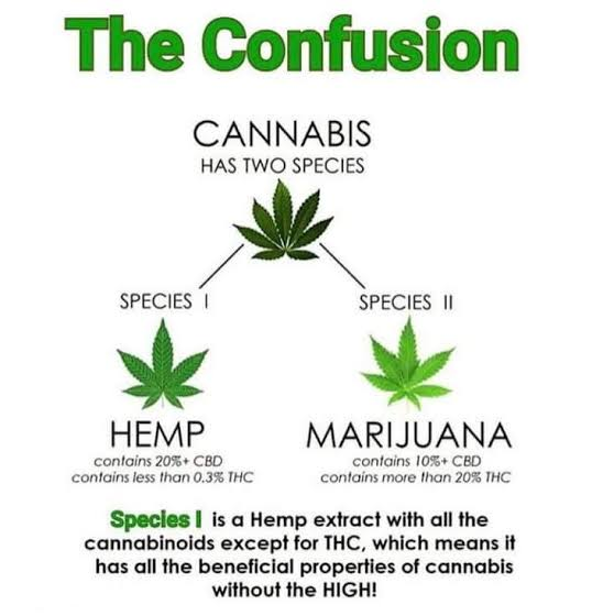 botanical difference between cannabis, marijuana and hemp