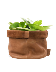Leather Pot Wild Oak Soft Grain Leather. Round leather plant pot. Homeware by O My Bag. Front product image with plant.